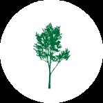 低木(3m未満)